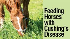 Learn how to manage your Cushing's horse's diet. ...
