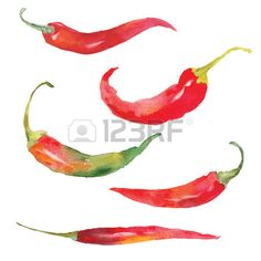 set of red chili pepper drawing by watercolor hand drawn vector illustration Stock Vector