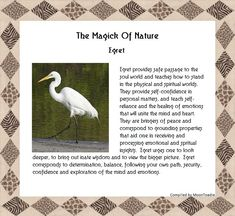 The Magick Of Nature. Power Animal, Animal Magic, Animal Spirit Guides, Spirit Animal, Nature Spirits, Classroom Bulletin Boards, Animal Totems, Love And Light, Magick