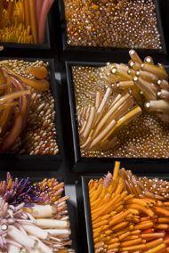 Shayna Leib, Glass Artist - Sculptural Glass Art
