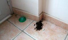 Une astuce imparable pour se débarrasser des fourmis pendant la nuit