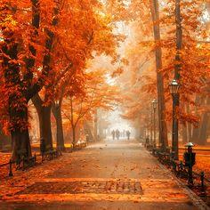 Autumn Orange, Krackow, Poland photo by matt rulez
