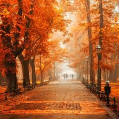Autumn Orange, Krackow, Poland. Love it!