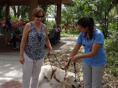 Southeastern Guide Dog Experience #guidedogs #therapydog