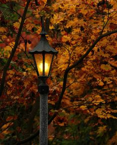 Autumn Twilight