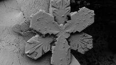 14 Striking Photos of Snow Under an Electron Microscope #Technology