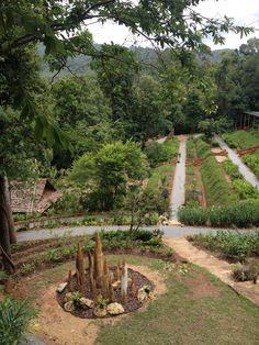 Ginger garden, Queen Sirikit Botanical Gardens