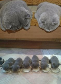 Frankus Wuffus - Google+ Mother and Child Cats