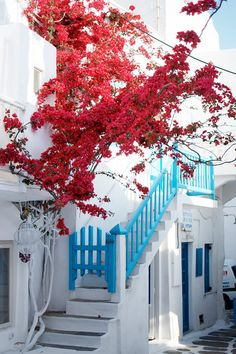 Guide to Mykonos - they just white washed the bottom of the vine, too!