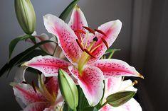 Stargazer Lily Katie Austin, Stargazing, Wedding Signs, I Tattoo, Tatting, Lily, Floral, Flowers, Plants