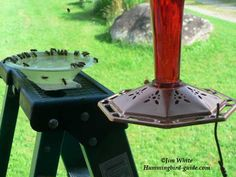 To prevent hummingbird feeder bees, wasps, yellow jackets or honey bees use tray or dish feeders or bee guards or hummingbird feeders with bee guards to keep the bees away.