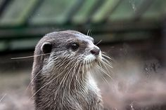 Otter stands at attention - January 18, 2015