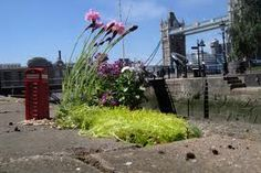 Guerrilla gardener Steve Wheen, London