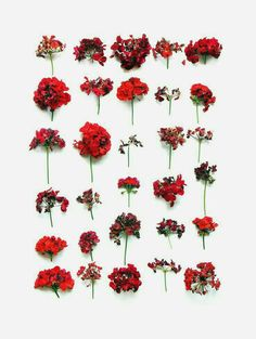Different shapes of red flowers. Interesting alignment.