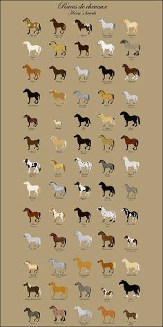 Horse Breed by Citron--Vert on DeviantArt