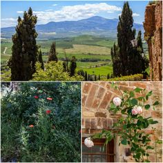 Plated Stories: Tuscany
