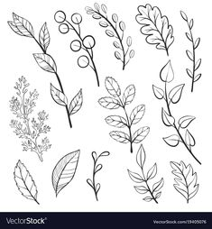 Set of vector doodle leaves and plants, isolated floral elements,. Doodle Art, Doodle Drawings, Easy Drawings, Drawing Sketches, Flower Drawings, Tattoo Drawings, Botanical Line Drawing, Botanical Illustration, Floral Illustrations