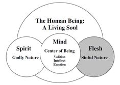 I chose this graph image as it describes the human living soul. As it divided it into three parts spirit, mind and flesh. As it describes the spirit as a godly nature, the mind as it is the center of being( volition, intellect and emotion), the flesh as sinful nature. And because it is good to know about the human being.