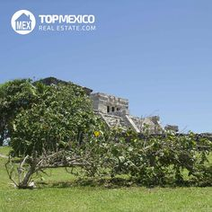 Here is one of the great beauties of #Tulum. If you would like to learn about…