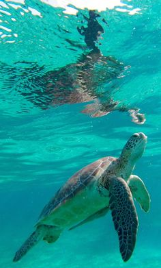 San Pedro, Belize — Swim with the turtles in the world's second largest barrier reef. Visit our site for the best things to do in San Pedro, Belize! #unbelizeable #belize