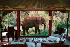 To know more about Makanyane Safari Lodge , Africa Hotel, visit Sumally, a social network that gathers together all the wanted things in the world! Featuring over 2 other Makanyane Safari Lodge , Africa items too! Dream Vacations, Vacation Spots, Africa Safari Lodge, Giraffe Hotel Africa, Places To Travel, Places To Go, Out Of Africa, To Infinity And Beyond, African Safari