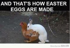 Rated X - hahahahahahaha ohhhhhhh thats how you get an Easter egg....