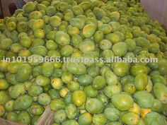 india products   East Indian Mango products,Jamaica East Indian Mango supplier