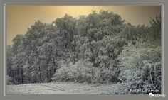 Zúzmarás tél
