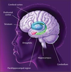 Core Concepts - BrainFacts.org