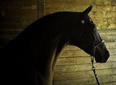B.L.A.C.K. Horse