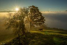 Awakening by Jan Geerk - Photo 177470261 / Dusk, Awakening, Mists, Country Roads, Explore, Sunset, Nature, Early Morning, Outdoor
