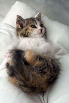 Precious fluffy baby!❤️❤️