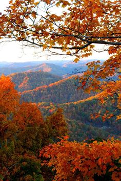 Tipped in orange. Autumn at Pine Mountain Kentucky Good. Fall Pictures, Fall Photos, Pine Mountain, Autumn Scenes, All Nature, Flowers Nature, Beautiful Landscapes, Beautiful World, Nature Photography