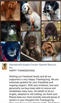 11/24/16 ❤️SENIORS IN NEED ❤️❤️🐾🐾❤️❤️❤️ /ij🐾🐾 https://m.facebook.com/story.php?story_fbid=10154169349128723&substory_index=0&id=184608133722&__tn__=%2As