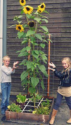 De voordelen van een schooltuin - Makkelijke Moestuin