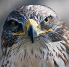 I've been having visions of falcons lately. When my shamanic gifts opened up, one of the first things that started happening were intense visions of animals – deer, snakes, horses, otters, hawks, eagles. It's inevitably amazing how aligned these visions are, and continue to be.   I've never seen a falcon, so I did a little research. I'm sharing it, because it feels to me like there may be a little medicine in this for you too.   Looking at your life with new eyes is an essential part of…