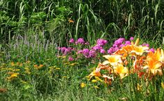 Butterfly Garden featuring native pink phlox, daylillies & Butterfly Weed / Milkweed for The  Monarch Butterfly