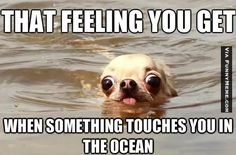 dog-memes-something-touches-you-in-the-ocean.jpg - Funny Dog Quotes - dog-memes-something-touches-you-in-the-ocean.jpg The post dog-memes-something-touches-you-in-the-ocean.jpg appeared first on Gag Dad. Dog Jokes, Funny Animal Jokes, Funny Animal Photos, Crazy Funny Memes, Really Funny Memes, Cute Animal Pictures, Cute Funny Animals, Stupid Funny Memes, Funny Animal Pictures