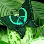 "Rare ""Wings of Love"" Butterfly.looks like a Peace sign Words of Love on Wings Butterfly Kisses, Butterfly Flowers, Green Butterfly, Peacock Butterfly, Morpho Butterfly, Blue Morpho, Butterfly Photos, Butterfly Wings, Beautiful Bugs"