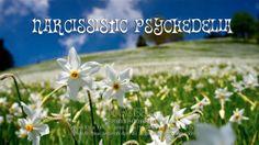 Narcisse! Exposition photographique du 30 mai au 1er juin 2014, au LoftA46 à Montreux. Montreux, 30 Mai, Narcisse, Switzerland, Plants, Radiation Exposure, Photography, Plant, Planets