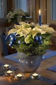 Kuvahaun tulos haulle joulukukat