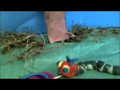 The Very Hungry Caterpillar Claymation