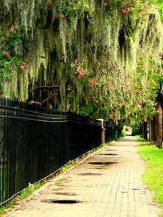 Beautiful South (Savannah)!  Iron fences, spanish moss - -