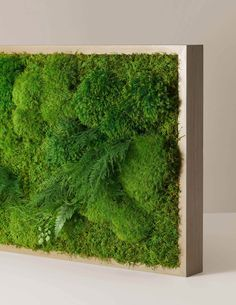 Preserved Large Living Wall, x – The Sill Moss Wall Art, Moss Art, Winter Plants, Spring Plants, Hanging Plants, Indoor Plants, Driftwood Chandelier, Victorian Greenhouses, Moss Decor