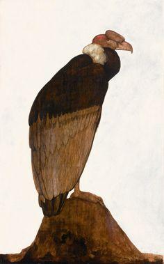 Willem van den Berg (1886 - 1970),The Andean Condor, oil on board, Sotheby's