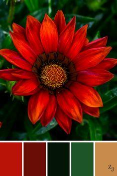 ZJ Colour Palette 593 #colourpalette #colourinspiration