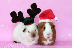 christmas pets - Google Search