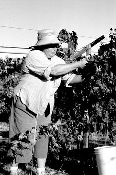 Kathryn Kennedy pioneer female in the CA wine industry. Her brand was one of the first to bear a woman's name.