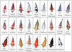 koi types/colors