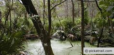 Palmetto State Park for canoeing this Spring